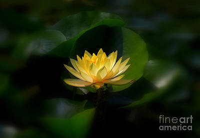 Yellow Lotus Art Print