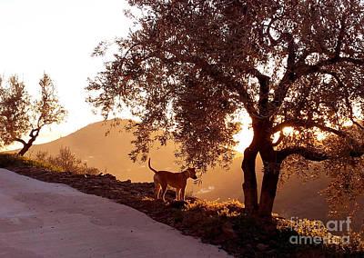 Photograph - Axarquia Sunset by Rod Jones