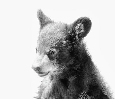 Photograph - Baby Bear Cub by Athena Mckinzie