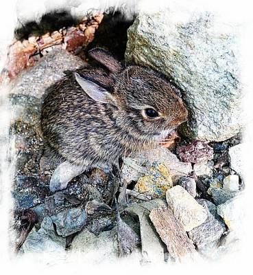 Photograph - Baby Cottontail by Joe Duket