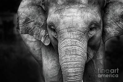 Photograph - Baby Elephant by Charuhas Images