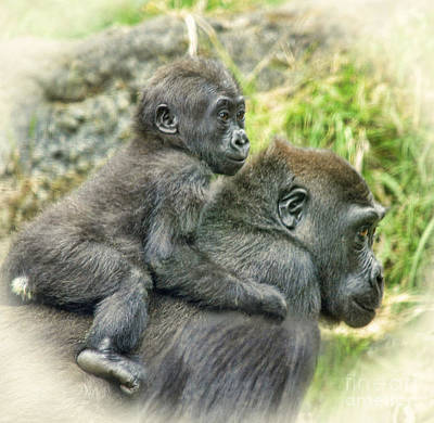 Photograph - Baby Gorilla Going For A Ride On Mommys Back by Jim Fitzpatrick