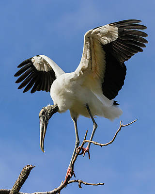 Photograph - Balancing Act by Dawn Currie