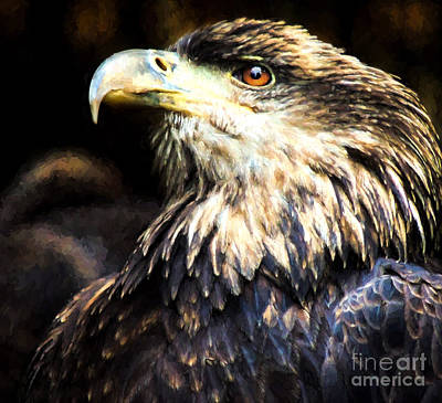 Nature Center Painting - Bald Eagle  by Mim White