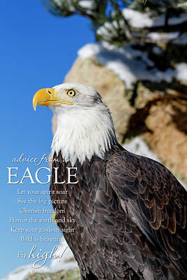 Photograph - Advice From A Bald Eagle by Teri Virbickis