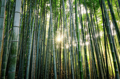 Photograph - Bamboo Forest At Arashiyama by Craig Szymanski