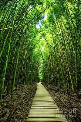 Bamboo Wall Art - Photograph - Bamboo Forest by Jamie Pham