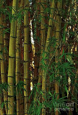 Photograph - Bamboo Of Hawaii by Craig Wood