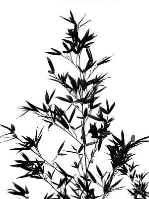 Bamboo Photograph - Bamboo Tree And Leaves by Yali Shi