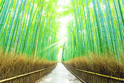Bamboo Tree Forest Beams God Rays Straight Path H Art Print