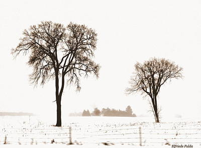 Photograph - Barely by Elfriede Fulda