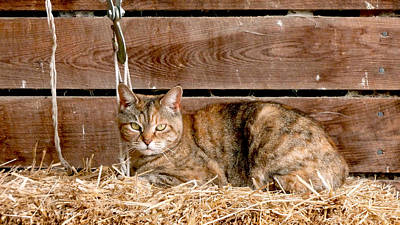 Eye Photograph - Barn Cat by Jason Freedman