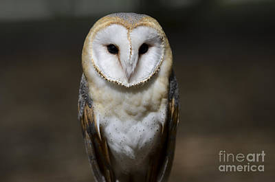 Photograph - Barn Owl 2 by Andrea Silies