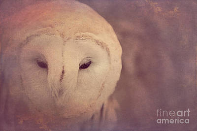 Photograph - Barn Owl 2 by Chris Scroggins