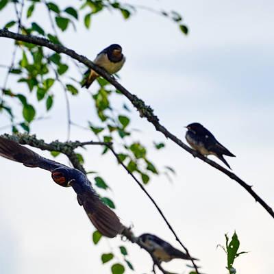 Open Impressionism California Desert - Barn swallow by Jouko Lehto