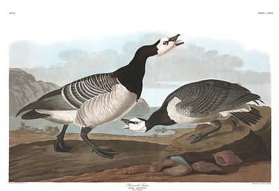Barnacles Wall Art - Painting - Barnacle Goose by John James Audubon