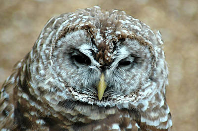 Michael Barry Photograph - Barred Owl by Michael Barry