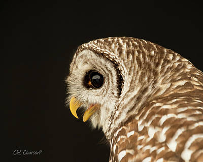 Photograph - Barred Owl Portrait by CR Courson