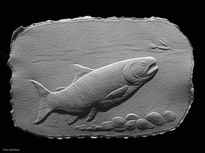 Art Print featuring the relief Bass Fish by Suhas Tavkar
