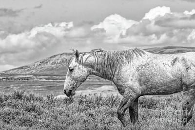 Photograph - Battle Weary by Jim Garrison