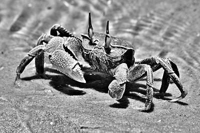 Photograph - Bazaruto Crab by Jeremy Hayden