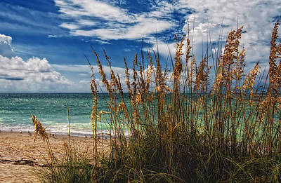 Photograph - Beach Grass II by Gina Cormier