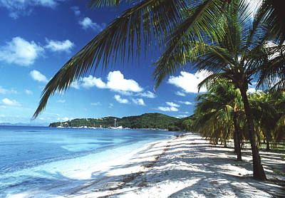 Mustique Photograph - Beach With Palm Trees by Peter Falkner
