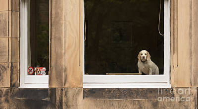 Vermeer Rights Managed Images - Beagle watch Royalty-Free Image by Keith Thorburn LRPS EFIAP CPAGB