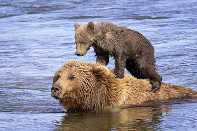 Photograph - Bear Back Rider by Jack Bell