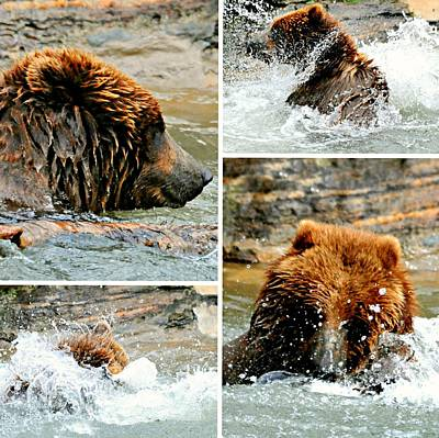 Photograph - Brown Bear Play by Diana Angstadt