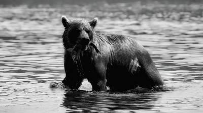 Photograph - Bear Salmon Fishing by Natalia Kollegova