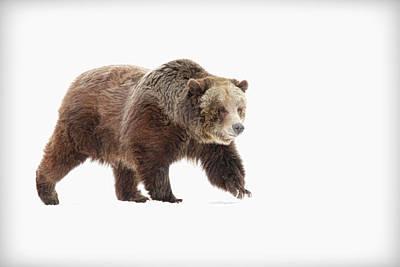 Photograph - Bear by Steve McKinzie