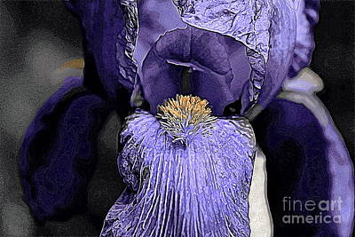 Photograph - Bearded Iris by Erica Hanel