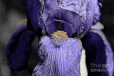 Photograph - Bearded Iris by Erica Hanel