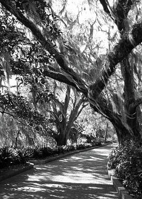 Photograph - Bearded Oaks At Maclay Gardens by Carla Parris