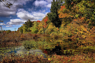 Photograph - Beautiful Autumn Day by Lilia D
