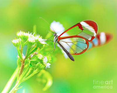 Photograph - Beautiful Butterfly On Flower by Anna Om