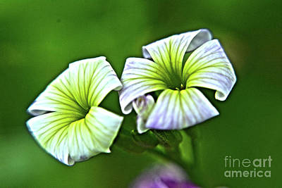 Photograph - Beautiful Flowers by Janice Spivey