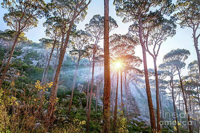 Photograph - Beautiful Forest Landscape by Anna Om