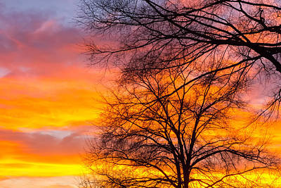 Photograph - Beautiful Landscape Image With Trees Silhouette At Sunset In Spr by Alex Grichenko