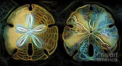 Mollusk Digital Art - Beautiful Sand Dollars by Amy Cicconi