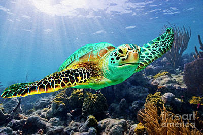 Beautiful Sea Turtle Art Print by Jon Neidert