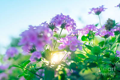 Photograph - Beautiful Spring Flowers by Anna Om