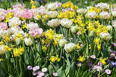Spring Bulbs Photograph - Beautiful Spring Flowers by Louise Heusinkveld