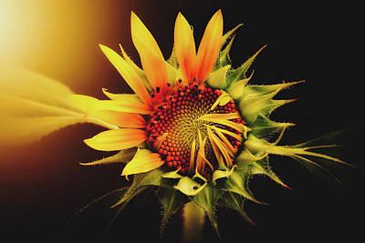 Photograph - Beautiful Sunflower by Pixabay