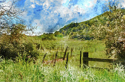 Soil Digital Art - Beautiful Vineyard In Napa Valley by Brandon Bourdages