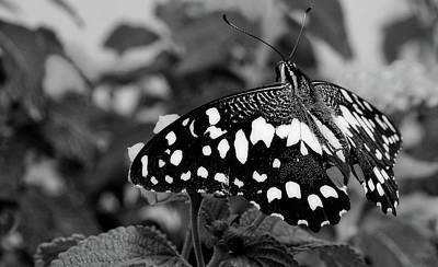 Photograph - Beauty Marks by Pixabay
