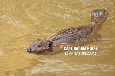 Photograph - Beaver 4197 by Captain Debbie Ritter