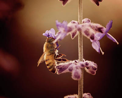 Photograph - Bee by Erica Kinsella