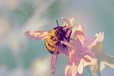 Photograph - Bee In Infrared by Brian Hale